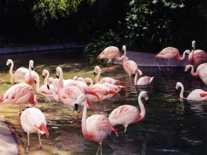 Fort Worth Zoo - Texas