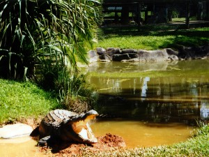 Australia Zoo is a 100-acre (40 ha) zoo located in the Australian state of Queensland on the Sunshine Coast near Beerwah/Glass House Mountains.